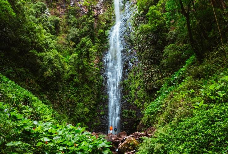 Waterfall pouring down against a wall of greenery © Tourism and Events Queensland/Reuben Nutt