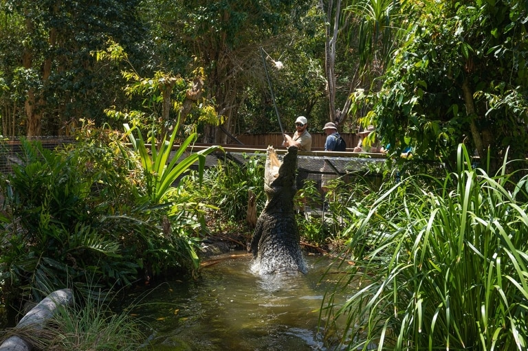 Crocodile jumps out of the water at Hartley's Creek Crocodile Adventures © Tourism Australia