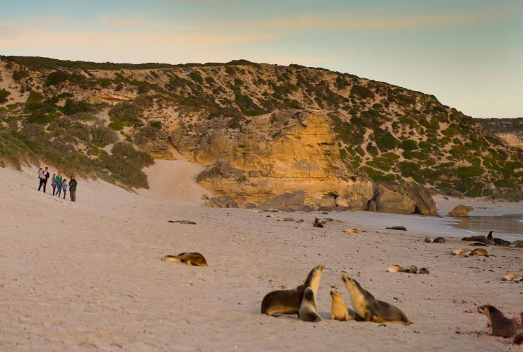Family views sea lions on the beach at Seal Bay Conservation Park on Kangaroo Island © South Australian Tourism Commission