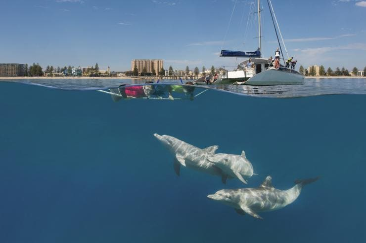 Snorkellers see dolphins while on a Temptation Sailing boat tour at Glenelg in South Australia © South Australian Tourism Commission