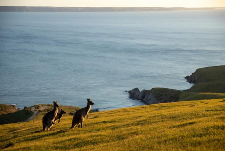 Deep Creek Conservation Park, Fleurieu Peninsula, SA © Jack Brookes