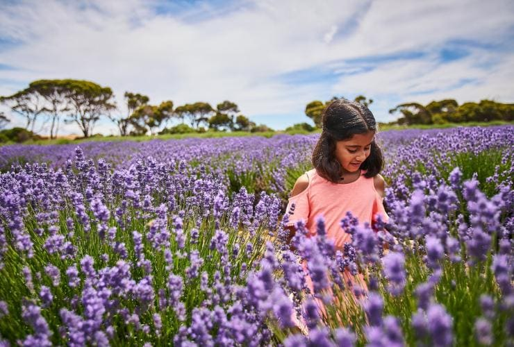 Emu Bay Lavender Farm, Kangaroo Island, SA © South Australian Tourism Commission
