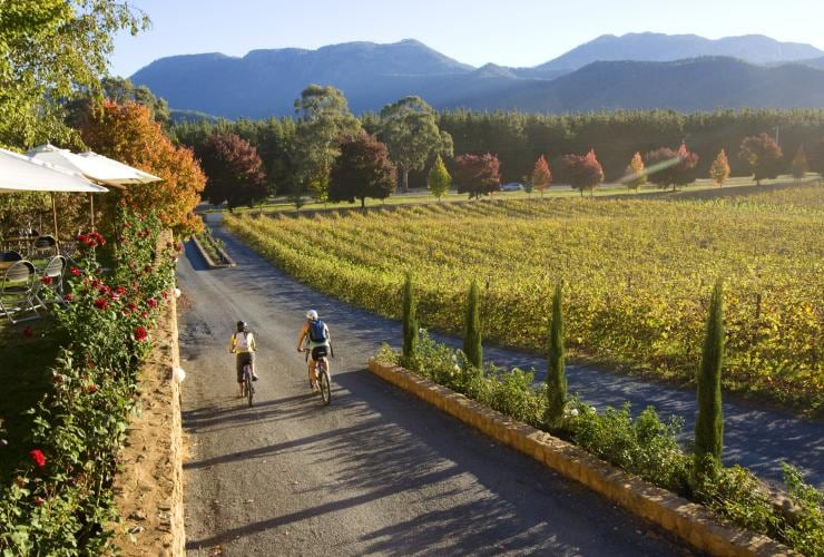Cycling alongside grapevines at Boyntons Feathertop Winery © Victorian Wine Industry Association