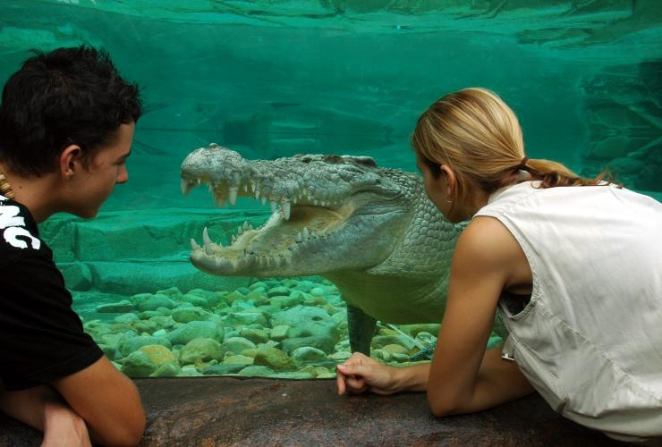 Travellers looking at a crocodile at the Cairns Zoom Wildlife Dome, Cairns, QLD © Cairns Zoom Wildlife Dome