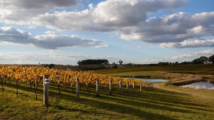 Vineyard, Orange, NSW © Taste Orange