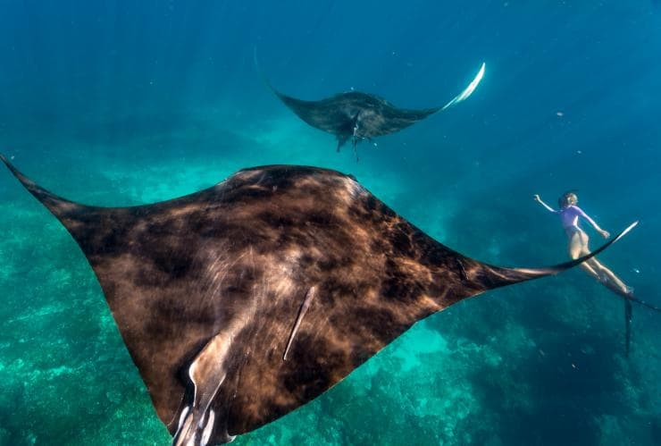 Swimming with Manta Rays, Ningaloo Reef, WA © Tourism Western Australia
