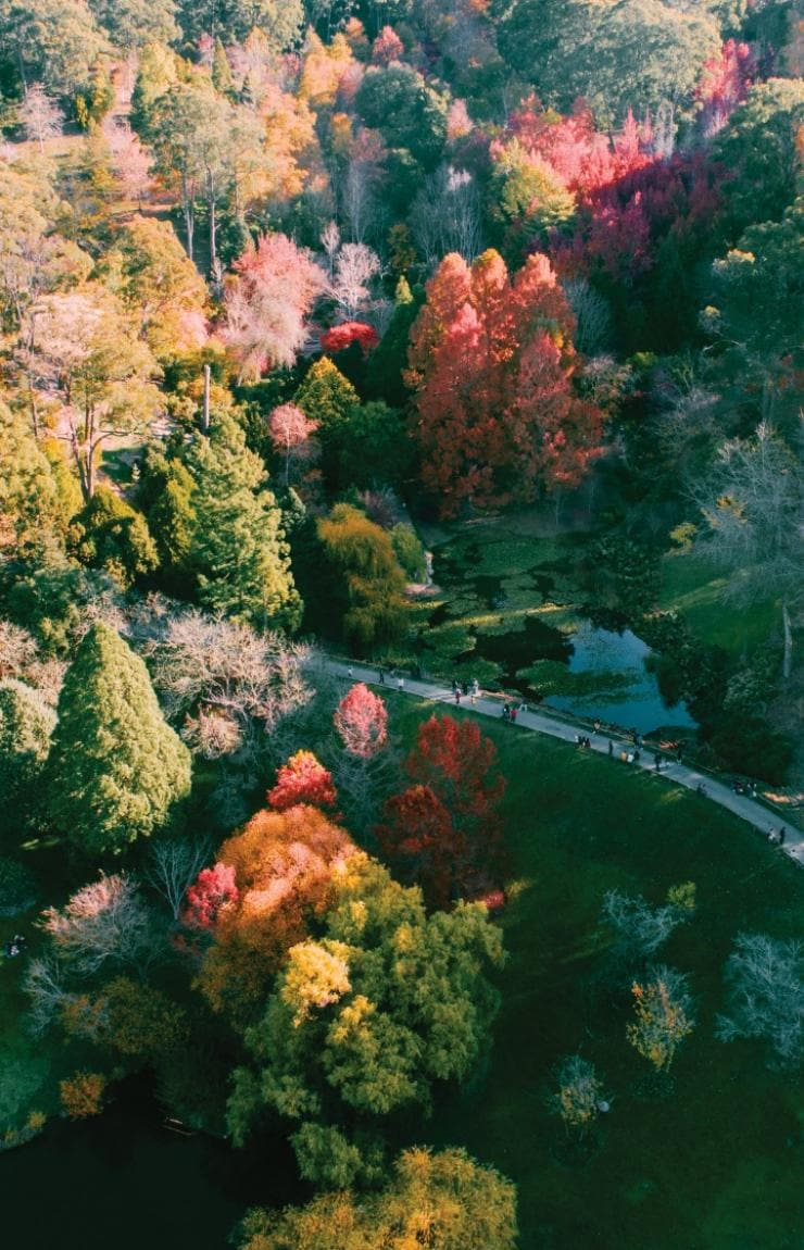 Mount Lofty Botanic Gardens, Adelaide Hills, South Australia © Sam Williams