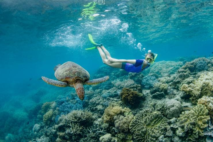 Girl snorkeling next to a turtle © Tourism and Events Queensland