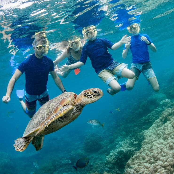 Family snorkelling with a sea turtle near Cairns © Tourism and Events Queensland