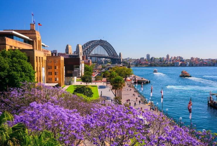 Jacaranda trees blooming in First Fleet Park, The Rocks in Sydney © Destination NSW