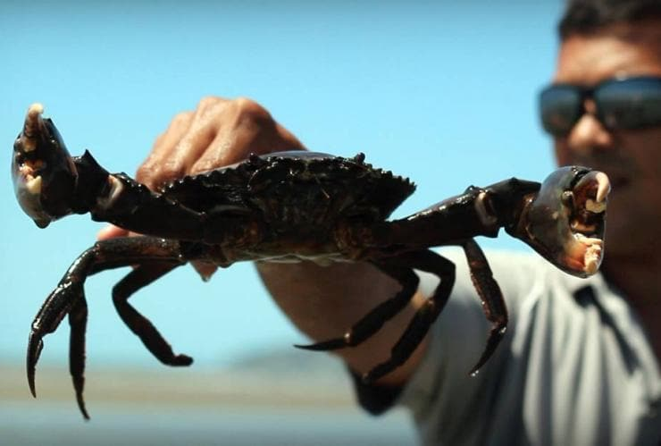 Guide holds a mud crab in Tropical North Queensland © Walkabout Cultural Adventures