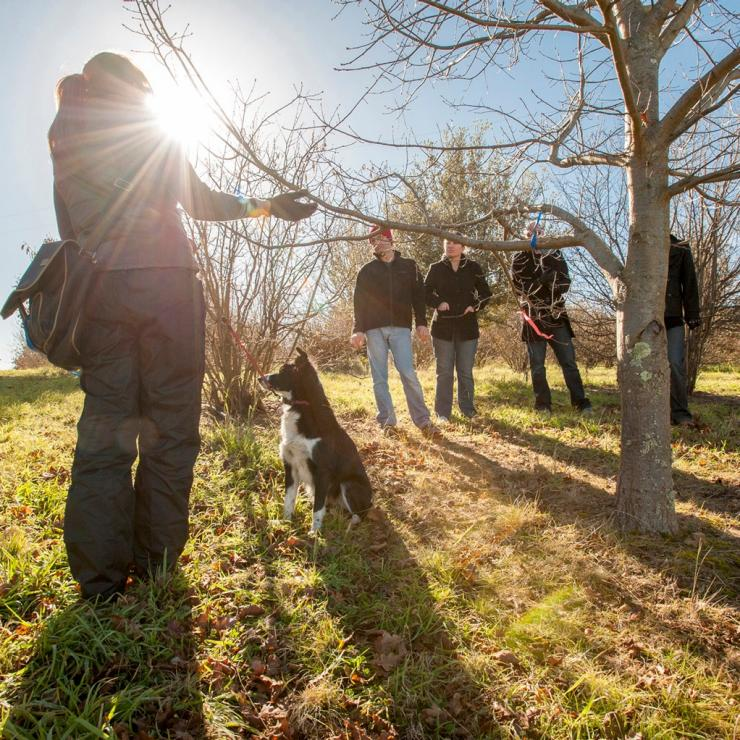 A group truffle hunting at the Truffle Festival in Canberra © Australian Capital Tourism