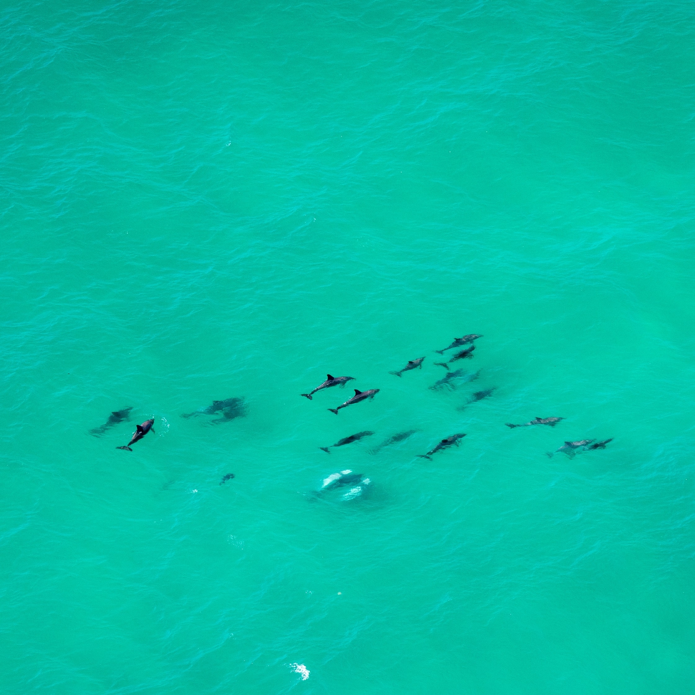 Pod of dolphins in the Cape Byron Marine Park © Tourism Australia
