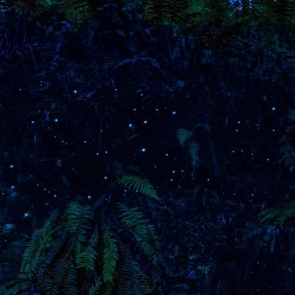 Glowworms in the rainforest at Melba Gully © Great Ocean Road Tourism