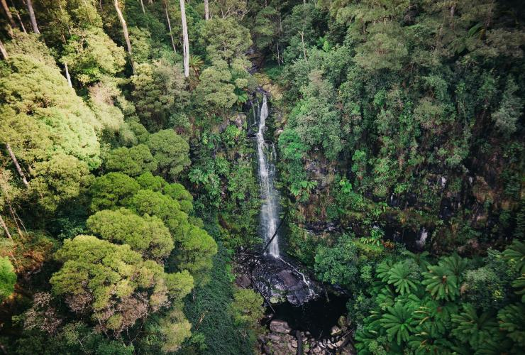 Aerial view over Erskine Falls waterfall near Lorne © Visit Victoria