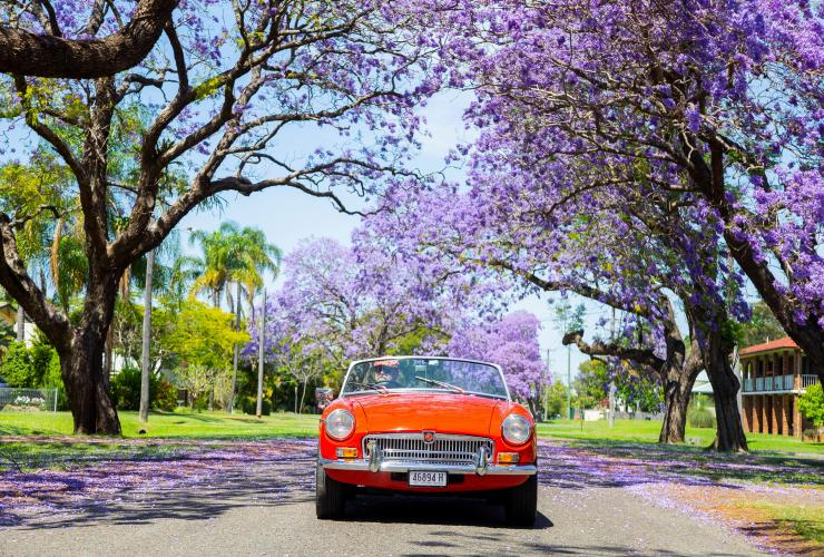 Grafton Jacaranda Festival, Northern Rivers, NSW © Destination NSW