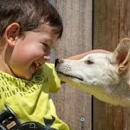 Child patting a DIngo at Sydney Zoo, NSW © Sydney Zoo