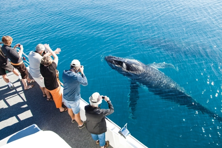 Hervey Bay Whale Watching, Hervey Bay © Matthew Taylor, Tourism and Events Queensland