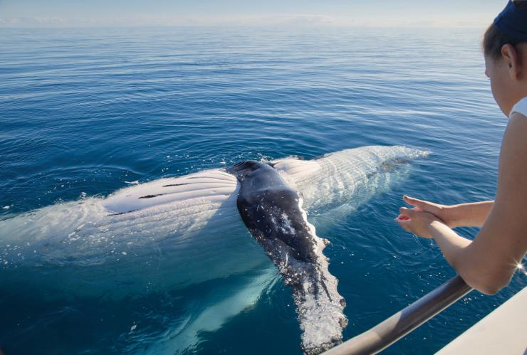 Whale watching in Hervey Bay © Tourism and Events Queensland
