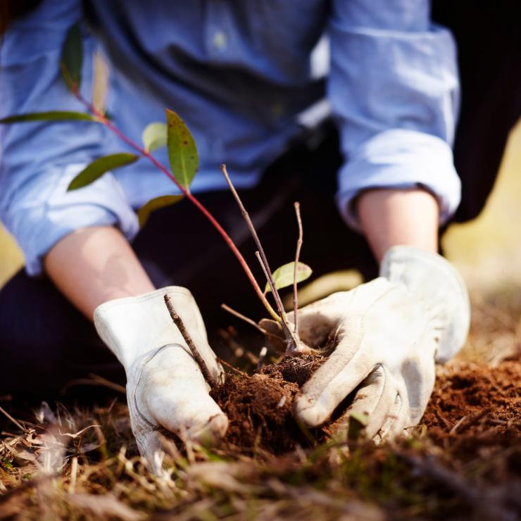 Planting trees, Emirates One&Only Wolgan Valley, Blue Mountains, NSW © Destination NSW