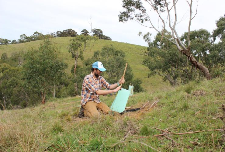 Volunteer planting trees in East Gippsland © Echidna Walkabout