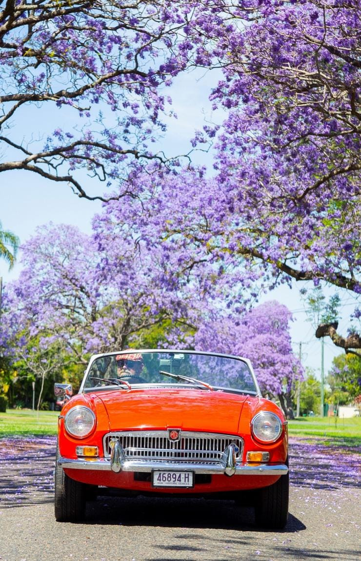 Vintage red car driving down a road with jacarandas in bloom © Destination NSW