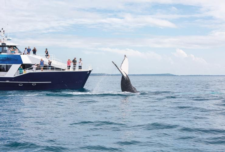 Whale breaching at Hervey Bay © Tourism and Events Queensland