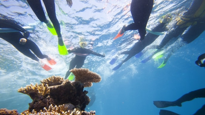 Snorkelling on the Great Barrier Reef, near Cairns, QLD © Tourism and Events Queensland