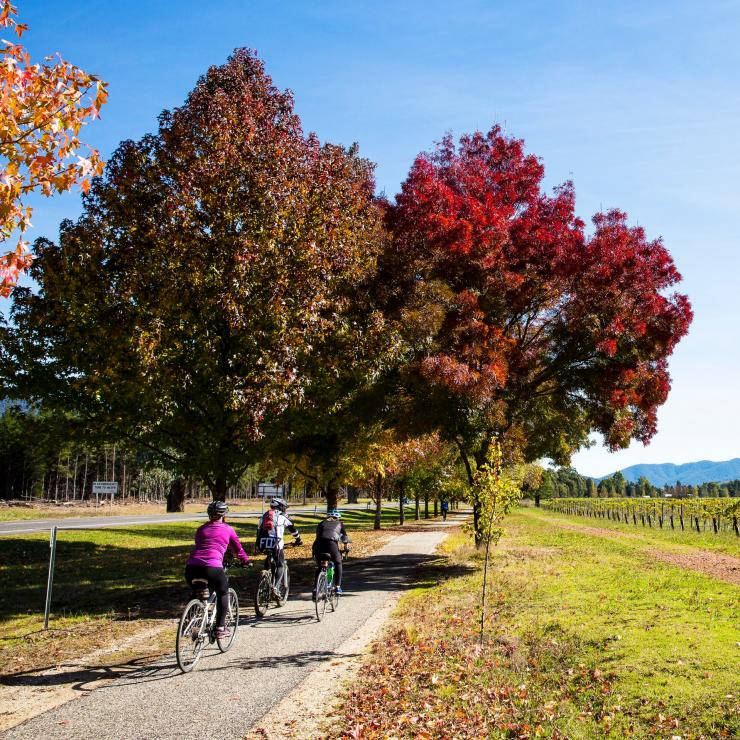 Cyclists riding along a rail trail near Bright © Josie Withers/Visit Victoria