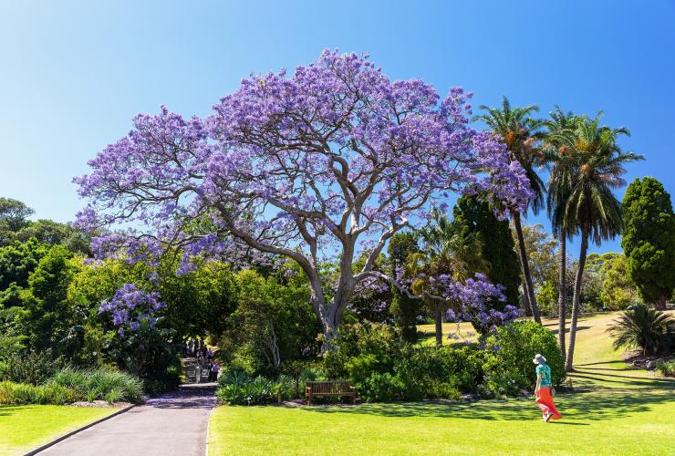 Royal Botanic Gardens, Sydney, NSW © Destination New South Wales