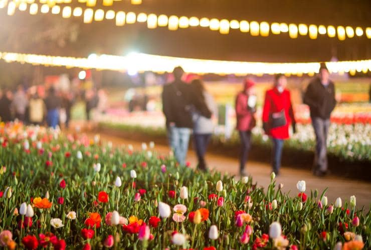 NightFest, Floriade, Canberra, ACT © VisitCanberra