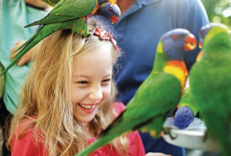 Child with rainbow lorikeets at Currumbin Wildlife Sanctuary © Tourism Queensland