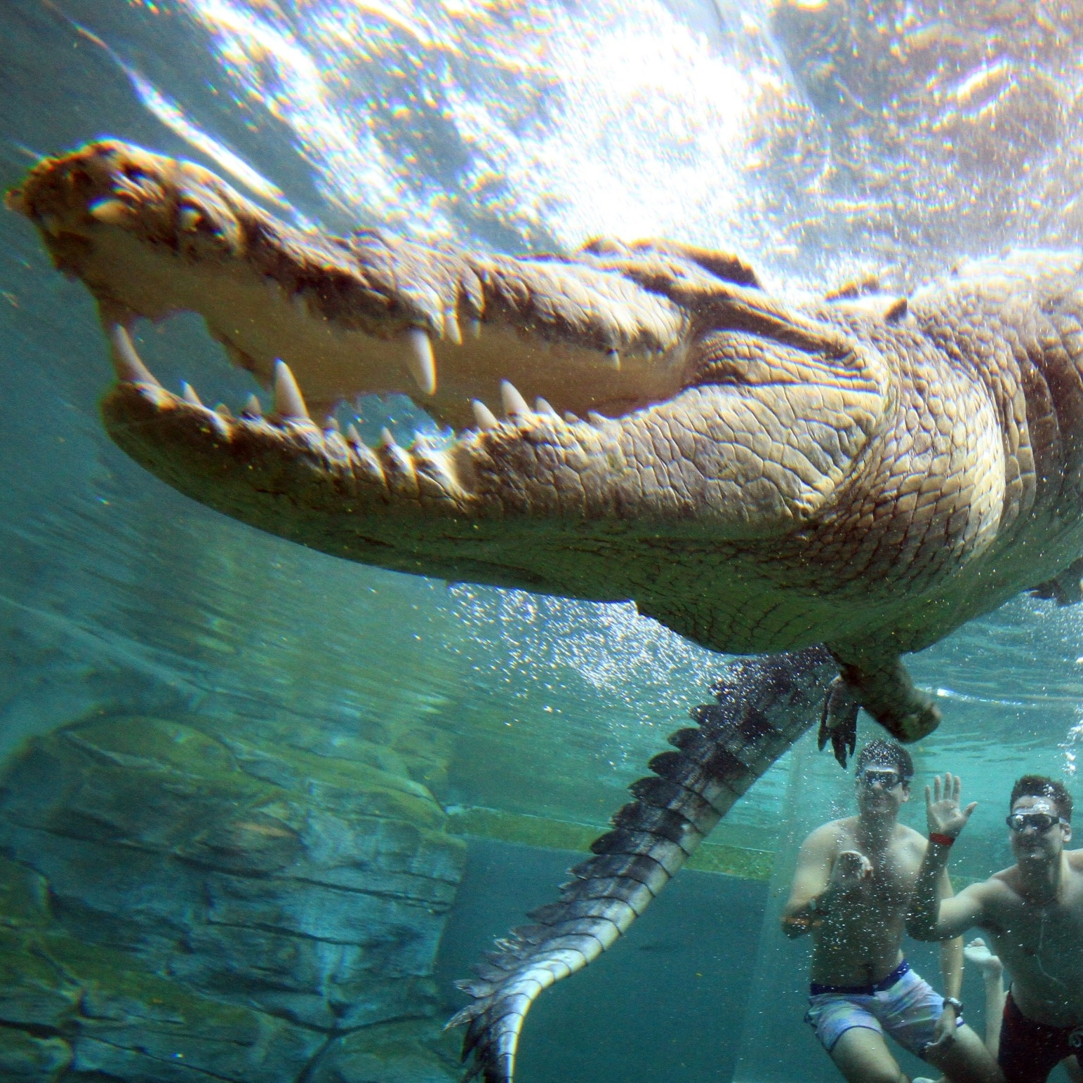 Crocodile encounters at Crocosaurus Cove, Northern Territory © Tourism NT/ Shaana McNaught