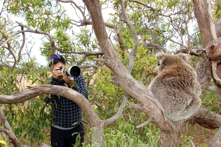 Man taking a photo of a koala on an Australian Coastal Safari in Port Lincoln © Australian Coastal Safaris