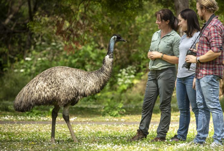 Couple with guide standing beside an emu in Tower Hill Wildlife Reserve in Tower Hill ©Artra Sartracom