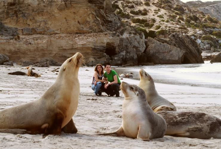 Couple crouched on a beach watching sea lions in Kangaroo Island © Tourism Australia