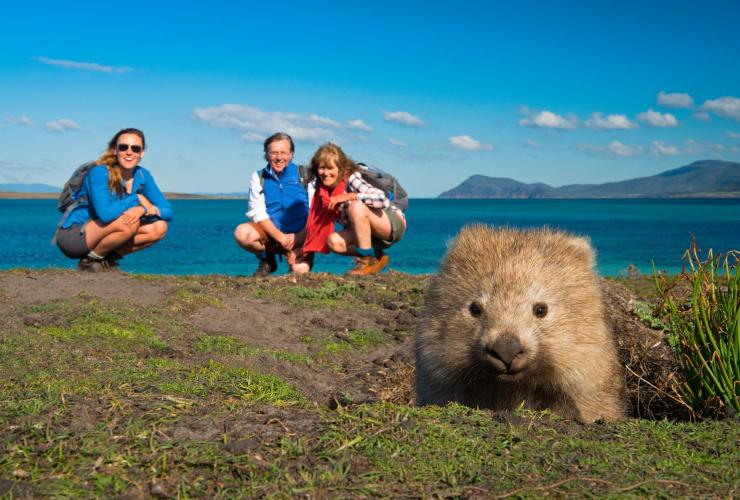 People watching a wombat from a distance on The Maria Island Walk in Maria Island © The Maria Island Walk