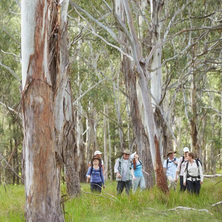 Scenic Rim Trail by Spicers, South East, QLD © Spicers Retreats