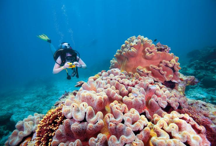 Scuba diving, Fitzroy Reef Lagoon, Southern Great Barrier Reef, QLD © Tourism and Events Queensland