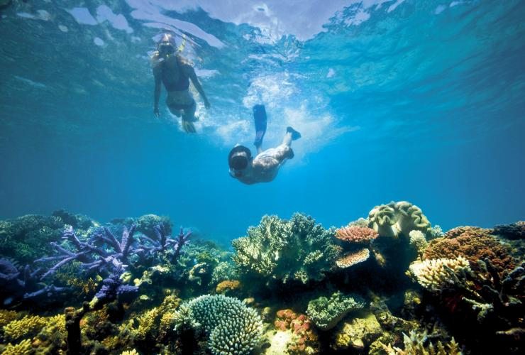 Snorkelling, Lizard Island, Great Barrier Reef, QLD © Tourism Australia