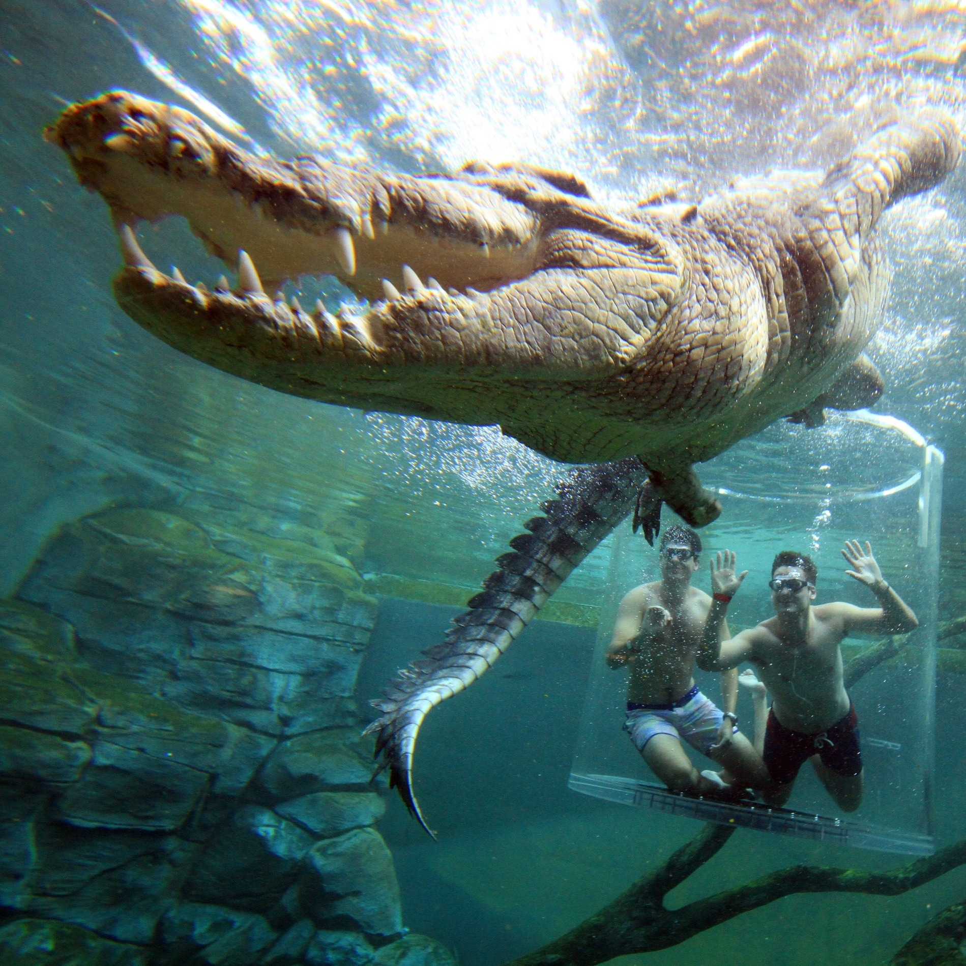 A visitor diving in the Cage of Death with a saltwater crocodile at Crocosaurus Cove © Tourism NT/Shaana McNaught