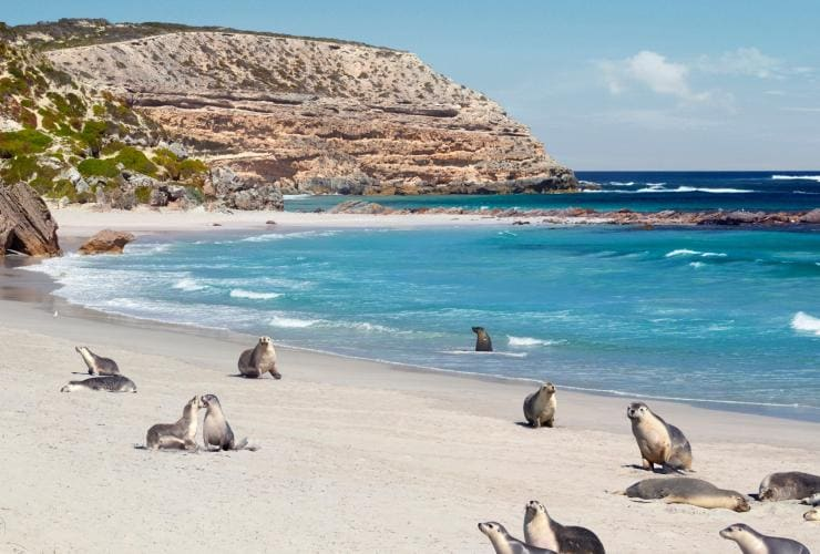 Seal Bay Conservation Park, Kangaroo Island, SA © South Australian Tourism Commission