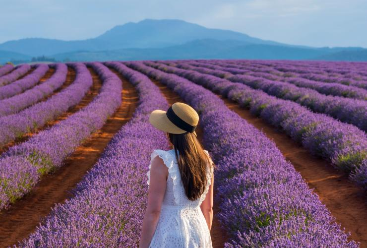 Young woman looking at rows of lavender at Bridestowe Lavender Estate © Luke Tscharke