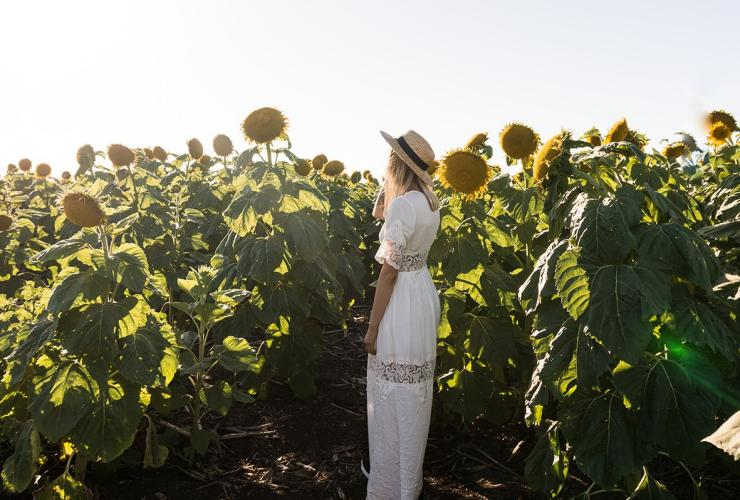 Young woman standing in a sunflower field © Scott Pass