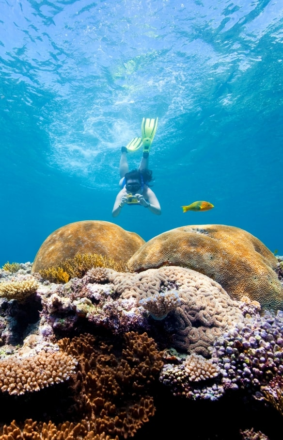 Snorkeller, Fitzroy Reef Lagoon, Great Barrier Reef, QLD © Darren Jew, Tourism and Events Queensland