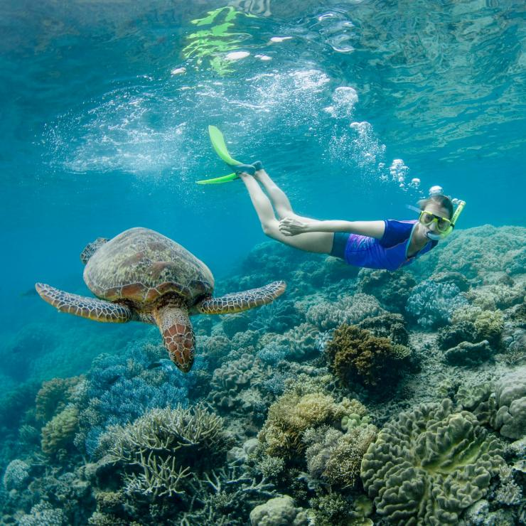 Snorkelling with a turtle on the Great Barrier Reef © Tourism and Events Queensland