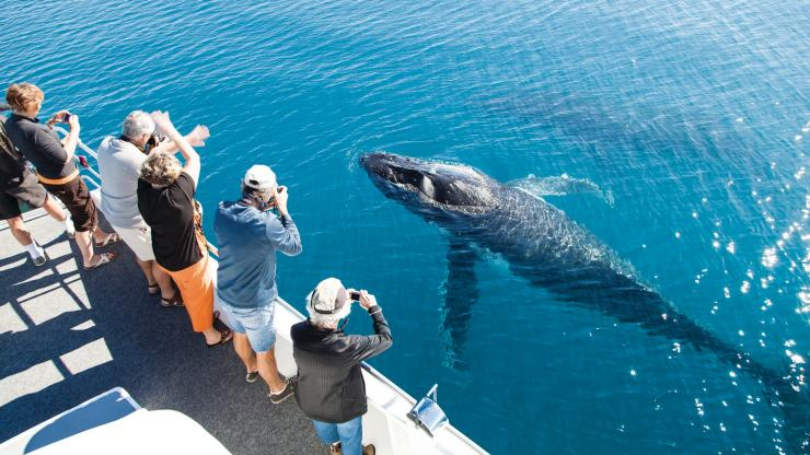 Whale watching, Hervey Bay, QLD © Matthew Taylor, Tourism and Events Queensland