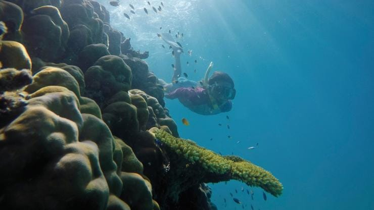 Snorkelling, Great Barrier Reef, Port Douglas, QLD © Tourism and Events Queensland