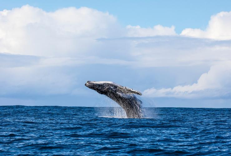 Whale watching, Jervis Bay, NSW © Jordan Robins