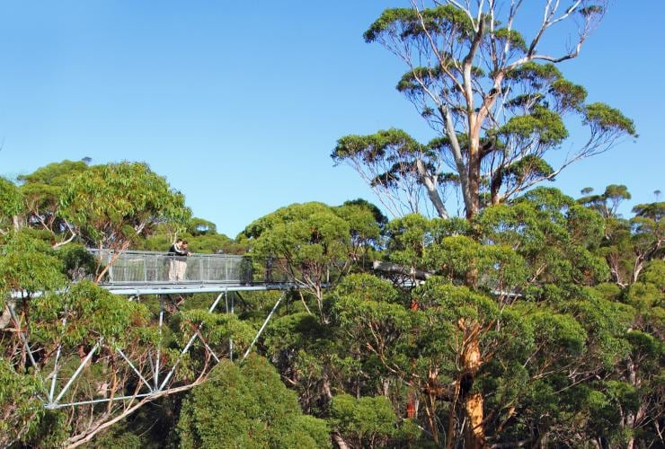 Valley of the Giants Tree Top Walk, Nornalup, WA © Western Australia Parks and Wildlife
